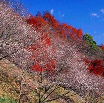 桜山公園 秋の彩り