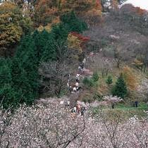 桜山公園晩秋のにぎわい
