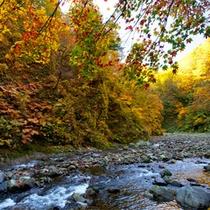 *秋の白神山地/渓流と紅葉の織り成す美しい風景が、そこかしこに広がっています。