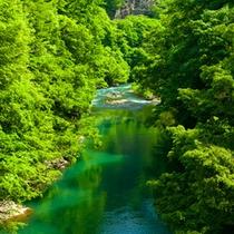 *春の白神山地/目屋渓とよばれる渓谷は、津軽十景に選ばれた県内屈指の名勝。