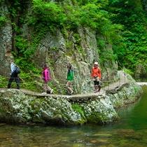 *夏の白神山地/コースはレベルに応じて各種ございます。お気軽にご相談ください。