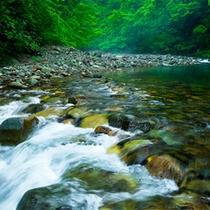 *春の白神山地/木々が芽吹き、豊かな湧き水があふれる四季の始まり。