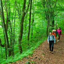 *夏の白神山地/ブナ林散策は、1時間程で周れる気軽な散策コースもございます♪