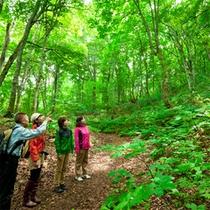 *夏の白神山地/ベテランガイドと一緒ならば、安心して散策を楽しめます♪