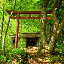 """*花咲松/文献により""""目屋発祥の地""""とされている松の木。"""