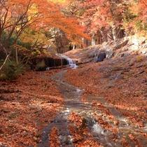 ☆周辺情報「奥岳自然遊歩道」①