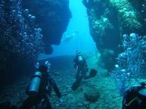 【マリンスポーツ】世界有数の透明度を誇る宮古の海の魅力をダイビングで体感