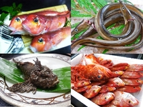 三国産の初夏の地魚(甘鯛・ハモ・オコゼ・ドッコ・レンコダイなど)★その日の入荷により日々変わります。