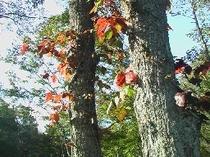 紅葉と空(野鳥の森探勝路)