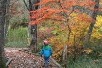 紅葉の中、落ち葉の音を楽しんで下さい。
