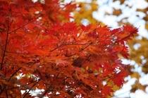 野鳥の森探勝路 紅葉の赤が美しい。