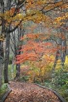 野鳥の森探勝路 ゆったりと散策出来ます。