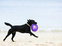 看板犬ティーラ