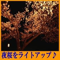 夜桜をライトアップ(4月上旬〜中旬)