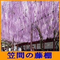 笠間の藤棚(5月上旬)