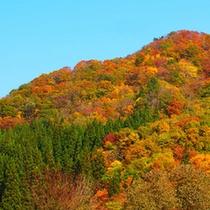 *鶴ヶ池荘周辺の美しい紅葉①