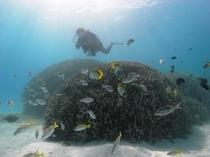 【アクティビティ】来間島で体験ダイビング