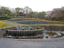 東山動植物園「お花畑」