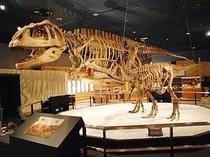 プラネタリウム(恐竜)