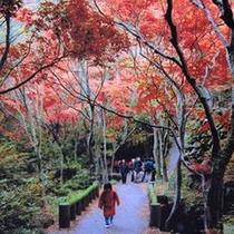 寒霞渓遊歩道(秋)