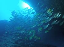 【ダイビング】広い海の中では様々な姿を見せてくれます。