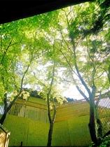 露天風呂から空を見上げると新緑の木々が鮮やかに露天風呂を演出しております(初夏~夏)。