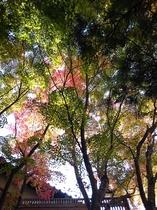 秋の露天風呂は紅葉を眺めながらのんびりと由布院温泉をお楽しみいただけます。