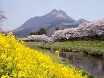 桜の見頃予想は4月15日!(個人的な予想なので桜の満開を保証するものではございません)