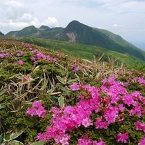 ミヤマキリシマと久住山