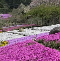 花の郷 滝谷花しょうぶ園(芝桜)