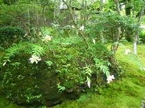 『箱根美術館②』大きな木に守られて美しいこの苔庭で《静かさ》に気がつきます