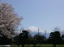 2014.4.18桜