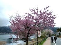 桜〜道路〜
