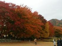 2015.11.17紅葉まつり