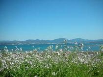 春の花と海