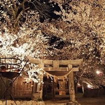 夕月神社の桜(4月頃)