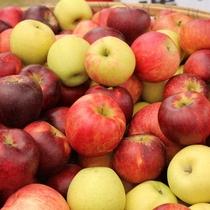 奥久慈 名産 リンゴ