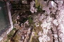 露天風呂 桜1