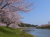 みなみの桜3