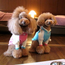 "Doggies Toy Poodle ""rotta&jill"""