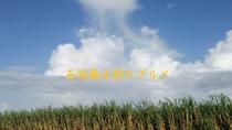 サトウキビ畑を見上げると小さな虹が掛っていました
