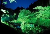 新緑の夜景