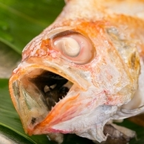 幻の高級魚・ノドグロ