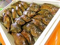 利尻産 ガヤ(エゾメバル) 煮付けがオススメです!