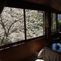 *【白鳳(一例)】満開の桜を眺める和室のお部屋です。