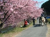 桜祭りの馬車です