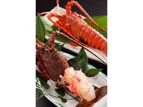 伊勢えびのお刺身とボイルの一例です。お刺身の場合は翌朝お味噌汁で頂けます