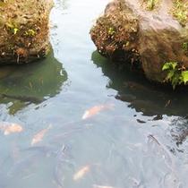 *庭園の眺め/大きな池には鯉が悠々と泳いでいます。のんびり眺めてお過ごし下さい。