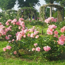 *敷島公園/毎年人気!毎年春と秋にはバラ祭が開催されます!アクセスは当館のすぐ目の前です♪
