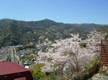 温泉棟から見える敷地内の桜(c)